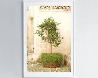 Photo Prints • Lemon Tree • Matera • Italy