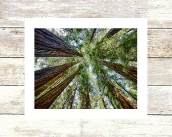 MUIR DREAM - Bay Area - Muir Woods - Fine Art Photograph - Limited Edition of  250