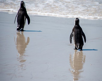 Beach Penguins - Animal Photography, Archival Giclee Print, Bird Wildlife Photo - Multiple Sizes Available