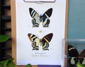 Vintage plate butterfly print