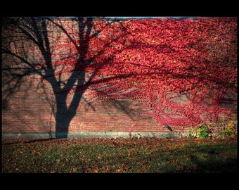 Shadow Branches Create Fall Color Illusion