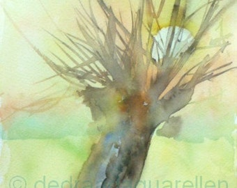 Pollard willow. Original watercolour.