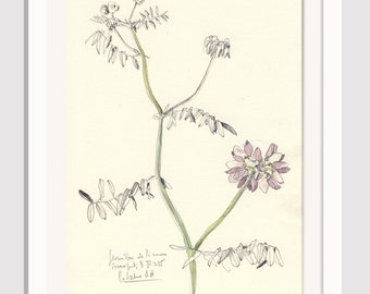 """Flower drawing Violet Vetches #2- pencil and watercolor drawing - ORIGINAL botanical art (8 x 11"""") Floral still life by Catalina S.A"""