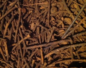1 Pound of Rusty Nails Misc Shapes and Sizes Steampunk Industrial Art Craft Gardening Similar to Photo