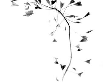 Love in black, photoart print/poster, 21x30cm (8,3x11,8inches)