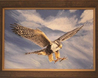 Aplomado Falcon - Original painting of beautiful Aplomado Falcon professionally framed