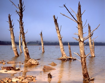 Dead trees of Theewaterskloof, South Africa