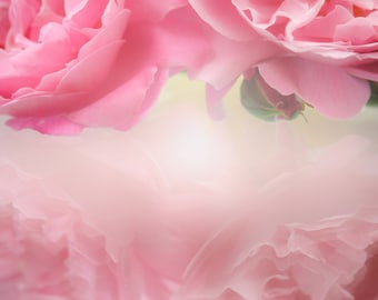 Instant Digital Download Fine Art Flower Photography - Pretty Pink Rose Reflection