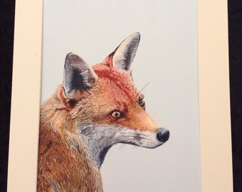 A3 size signed Giclee print 'Mr Fox.'