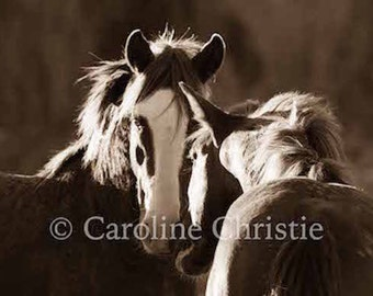 "Wild Horse Photos, Mustangs, Horse Photos. Salt River, AZ. ""Evening Light"""