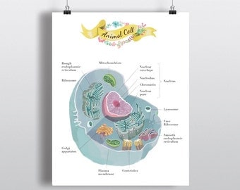 Animal cell Poster, Art, print, wall decor  11 x 14 inch