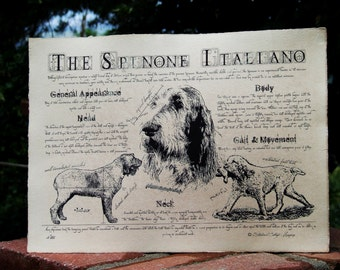 Antique styled dog standard - Spinone Italiano
