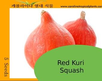 Red Kuri Squash Seeds - 5 seeds
