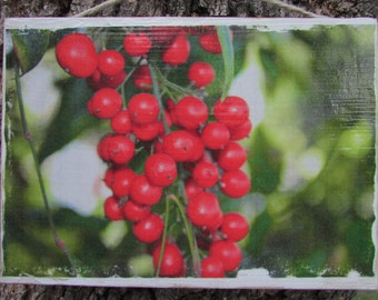 Red Berries Photo Transfer on Wood