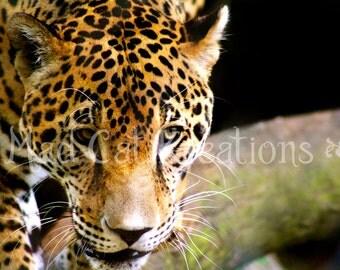 Eye of the Jaguar