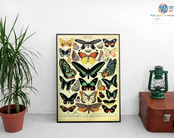 "Adolphe Millot Butterfly Poster - ""Papillon"" Digitally restored  print / art / poster"