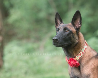 Summer Dog Collar –Yellow Berries Dog Collar – Strawberry Dog Collar – Raspberry Dog Collar - Handmade Fabric Dog Collar