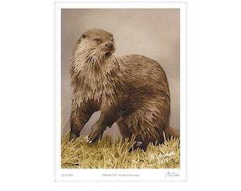 Otter, European Otter, Mammal, Art, Print, Wildlife, Animal, Watercolor, Limited Edition, Giclee, Archival, 11x14