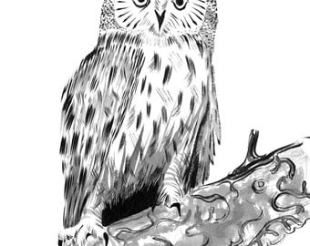 "Long-Eared Owl - 9 x 12"" Original Painting, Waterproof Ink on Watercolor Paper."