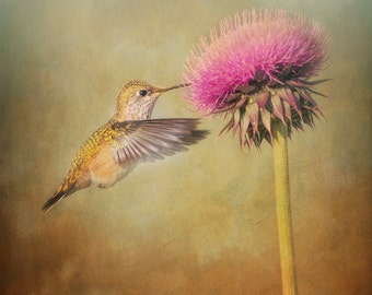 Hummingbird Print, Hummingbird Photo, Hummingbird, Wildlife Print, Flower Print, Hummingbird Art, Nature Print, Wildlife Photography, Square