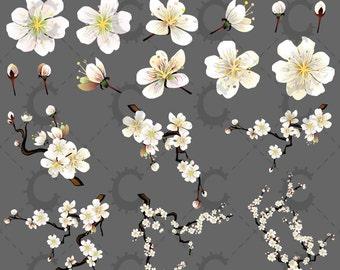 White Sakura/Cherry Blossom Clipart Collection
