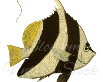 Fish Illustration, Black and White Fish Clipart, PNG Digital Image for printing, digital artwork  INSTANT DOWNLOAD - 1089
