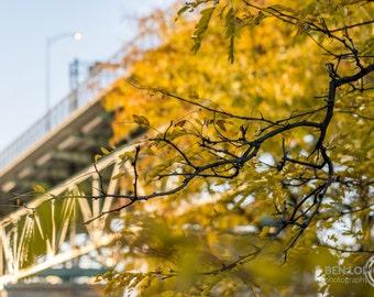 "High Quality Photographic Print - ""Autumn's Reach"""