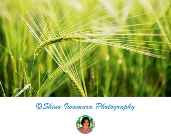 Nature Photography Green Color Macro Photo Wall Art Print
