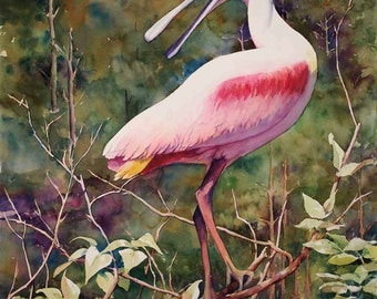 "Roseate spoonbill, pink bird,  Louisiana marsh bird 12x16"" print of watercolor painting"