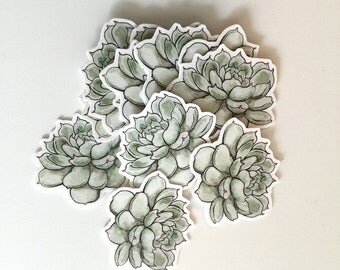 Succulent Vinyl Sticker Pack - 5 Mini Stickers