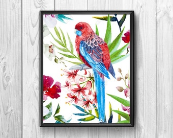 Magnificent Brazilian parrot in vivid colors