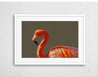 Flamingo Bird Art Photo With Frame