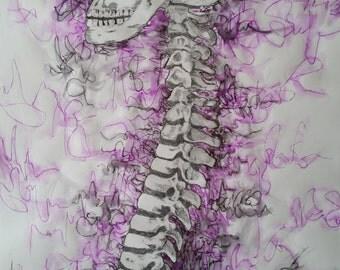 Skull & Spine