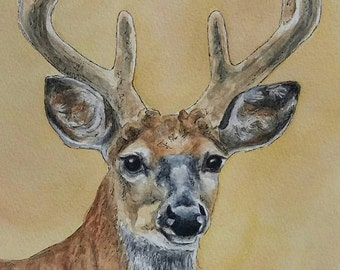 Deer - Original Watercolour