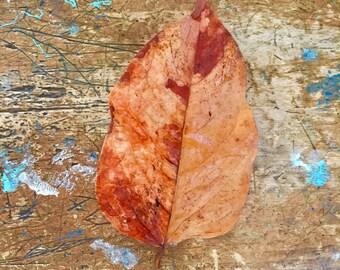 Leaf Autumn Fall old Fashioned School Chair Greeting Card