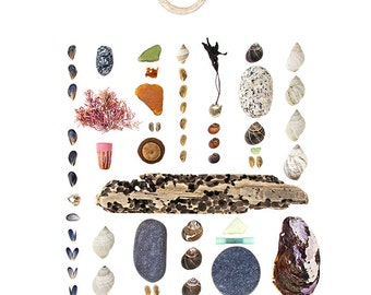 Coast Walk2 - 11x14 photograph - driftwood, sea glass, beach stones, seaweed, seashells