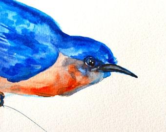 Blue Bird Watercolor Painting, Original Art, Birds