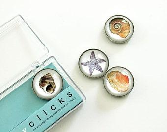 Seashell magnets, 4 beach art magnets, seashore fridge magnet set