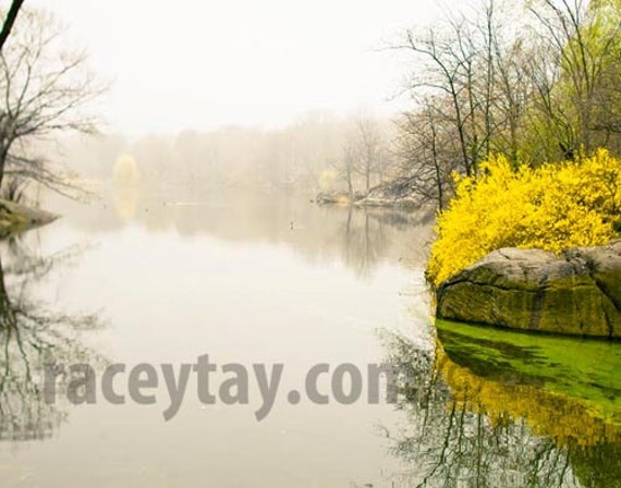 Central Park Print, Spring, Gray, Yellow, New York Print, Rustic Wall Art, Central Park Pond, Nature Photography
