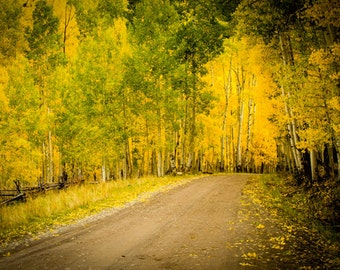 Aspen Leaves Country Road , Fine Art Print , Watercolor Photograph , Colorado Back Roads , Ouray , Telluride , Silverton Co