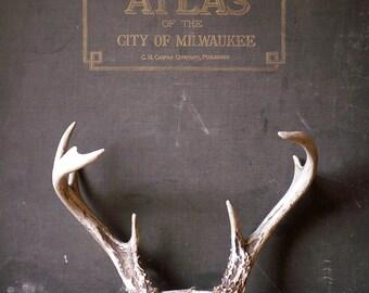 Vintage Set of Deer Antlers with Skull Cap - Great Guy Gift!