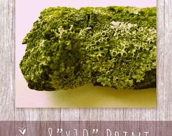 "8"" x 10"" Landscape Lichen Moss Photography Print"