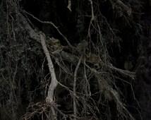 Haunted Limbs | Dark Art Woodland 5x7 Art Print Tree Branches Nature Photography Fine Art Print Black Metal Mysterious Rustic Decor