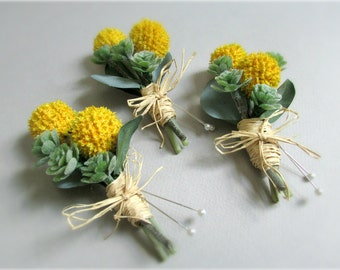 "Yellow Craspedia and Green Succulent Boutonnieres, Billy Buttons, Miniature Sedum, Eucalyptus, Groom's Boutonniere, Groomsmen, ""Constant"""