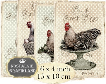 Farm Hen Chicks Poulet Chicken Eggs Nest Rooster printable 6 x 4 inch Instant Download digital collage sheet D277
