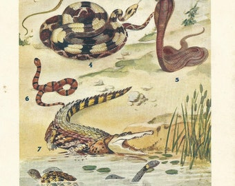 1928 REPTILES & BATRACHIAN: Frogs, turtles, snakes... Authentic antique 87 years old nice print!