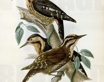 Collection of Birds on Tree Branch Graphic - High Resolution Digital Download No.705