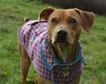 Wool Dog Coat in Violet