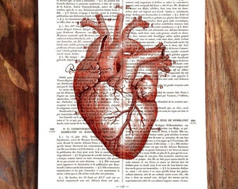 Le Rembradt, old fench writing with anatomic heart