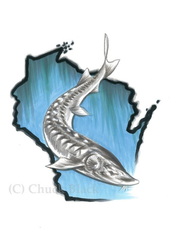 Wisconsin Sturgeon Limited Edition Art Print A True